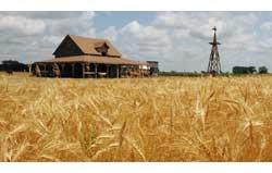 サウスダコタ州ドスメットに近い「インガルズ農場」。小麦畑、家畜小屋、農家のある、中西部の典型的風景。(AP/WWP)