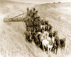 19世紀、米国中西部で馬に引かせたコンバインでの小麦刈り入れ作業 (© Bettmann/CORBIS)