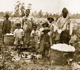 1860年代初頭、ジョージア州サバンナ近郊で綿花を収穫する奴隷家族 (© Bettmann/CORBIS)