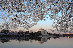 Virtual America: ワシントンの桜